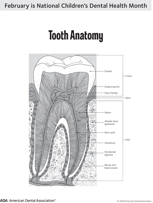 Healthy Smiles : Dental Health Awareness Month! Tooth ...
